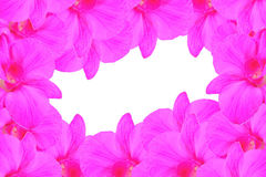 Pink orchid stock photography