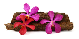 Pink orchid. Beautiful Red Vanda orchids flowers, isolated on white background Royalty Free Stock Photo