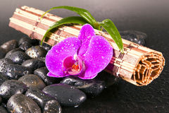 Pink orchid and black stones. Stock Photo