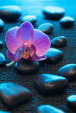 Pink orchid and black stones on black mate. Blue light stock photography