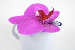 Pink orchid blossom Stock Image