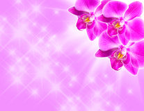 Pink orchid on blue Stock Photography