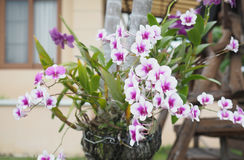 Pink orchid bouquet Stock Photography