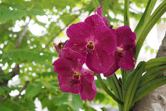 Pink orchid bouquet Royalty Free Stock Images