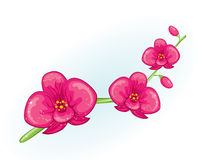 Pink orchid branch Stock Photo