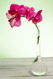 Pink orchid branch against green background Stock Image