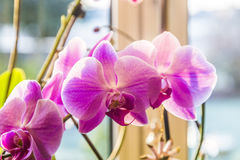 Pink orchid branch Stock Photos