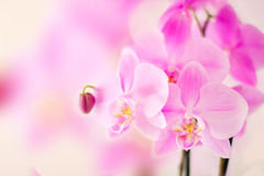 Pink orchid with bright bokeh Stock Images