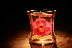 Pink Orchid Candle. Spotlit Orchid encased in candle Stock Images
