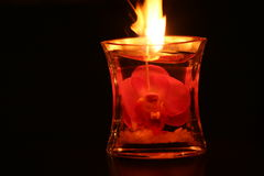 Pink Orchid Candle lit. Spotlit Orchid encased in candle just lit Stock Photography