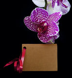 Pink orchid and card. Beautiful branch pink orchid flower with coupon Royalty Free Stock Photos