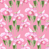 Pink orchid, cattleya on pink background. Seamless watercolor pattern Royalty Free Stock Image
