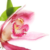 Pink Orchid closeup Stock Photos