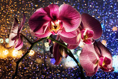 Pink orchid on colored background with drops Royalty Free Stock Photos