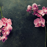 Pink orchid on a dark background Royalty Free Stock Photography