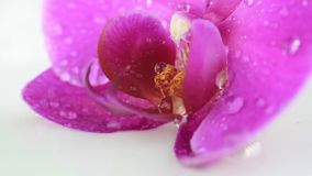 Pink orchid with dew stock video footage