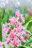 Pink orchid in a Dutch greenhouse Stock Photography