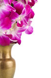 Pink orchid flower Stock Photos