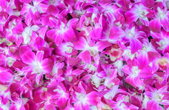 Pink orchid flower background Stock Photo