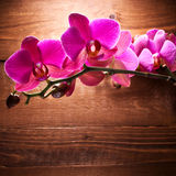 Pink orchid flower in bloom Stock Photo