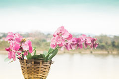 Pink orchid flower blooming beside the river scenery Royalty Free Stock Image