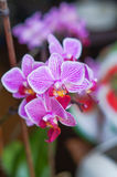 Pink orchid flower blossom Stock Photos