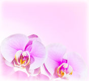 Pink Orchid flower border Royalty Free Stock Photo