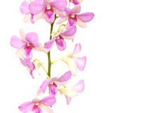 Pink orchid flower bud isolated on white background Stock Image