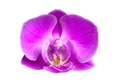 Pink orchid flower close-up Stock Photos