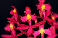 Pink orchid flower. Close up of avery small and pink orchid flower Stock Images