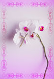 pink orchid flower gently. Stock Photography