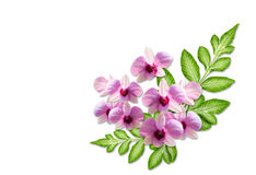 Pink orchid Flower and green leaf Stock Images