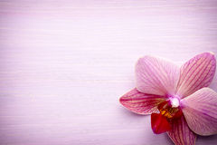 Pink orchid flower. Royalty Free Stock Images