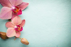 Pink orchid flower. Royalty Free Stock Image