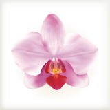 Pink Orchid flower,  icon Stock Images