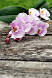 Pink orchid flower on old wood planks Stock Photos