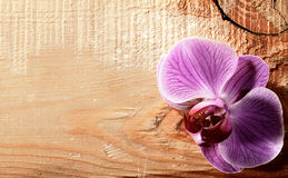Pink orchid flower over wooden desk stock images