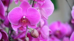 Pink orchid flower stock video