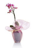 Pink orchid flower in a pot isolated on white Stock Photography
