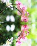 Pink orchid flower and reflection in the Water Royalty Free Stock Images