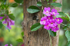 Pink orchid flower. On tree Stock Photos