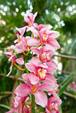 Pink orchid flower with tropical plants Stock Photos