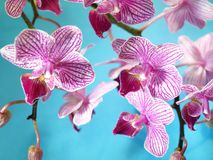 Pink orchid flowers Stock Photo
