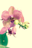 Pink  orchid flowers. Background with pink orchid flowers Stock Photo