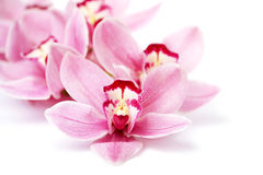 Pink orchid flowers isolated on white Stock Photo