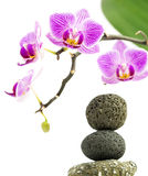 Pink Orchid flowers and pebbles pyramid on white background. Pink Orchid flowers with green leaf and pebbles pyramid on white background Royalty Free Stock Photography