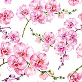 Pink orchid flowers phalaenopsis on white background. Seamless floral pattern. Watercolor painting. Hand drawn illustration. Pink orchid flowers phalaenopsis on Royalty Free Stock Image