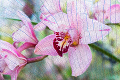 Pink orchid flowers on tree stump texture background. Royalty Free Stock Image