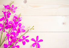 Pink orchid flowers on a wooden background Stock Images