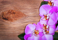 Pink Orchid Flowers on Wooden Background. Beautiful bouquet Stock Photo
